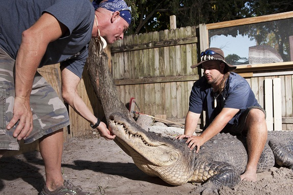 Discovery Channel premiers new show GATOR BOYS