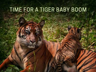 Discovery Communications announces 'Project C.A.T.: Conserving Acres for Tigers'